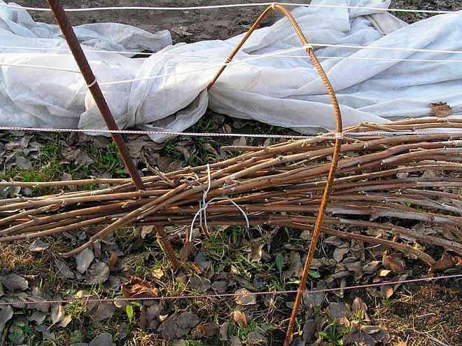 Осенний уход за малиной ремонтантной