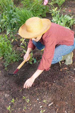 Как подготовить огород к зиме