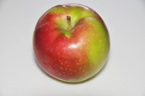 Самые вкусные сорта яблонь