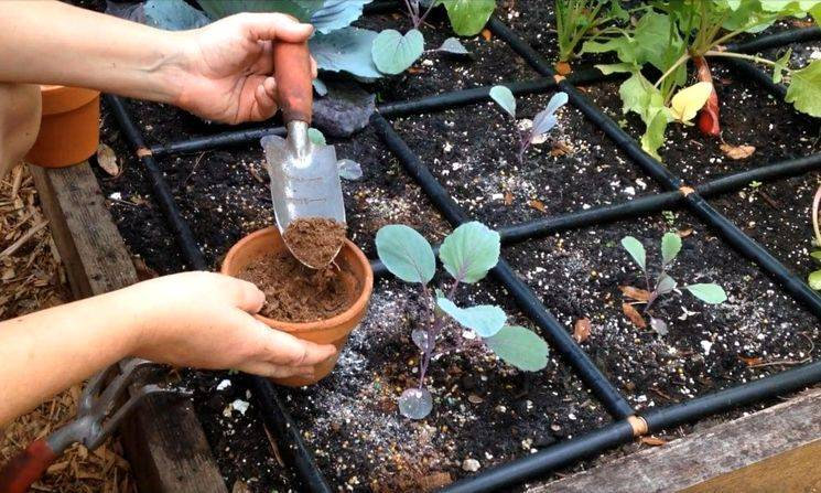 Комплексные удобрения для плодовых деревьев