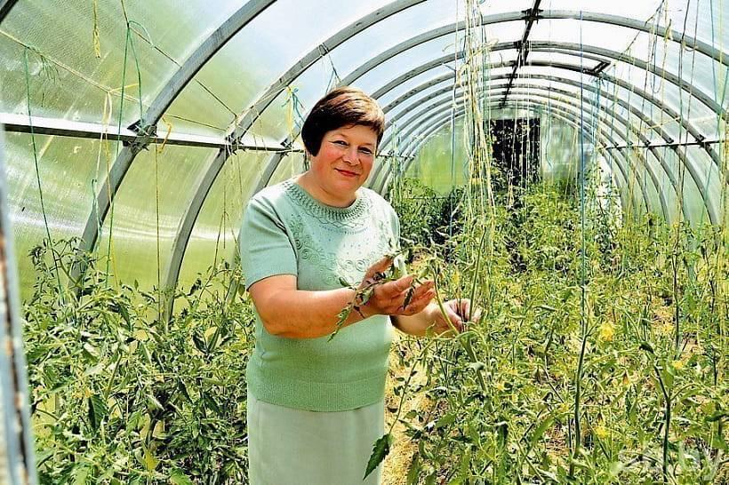 Сорта помидор для витебской области