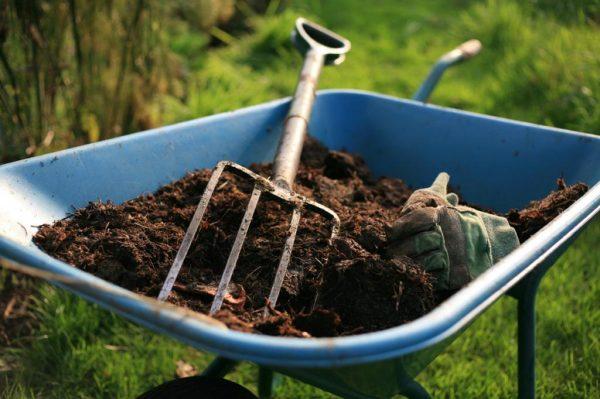 Как удобрять куриным пометом огород