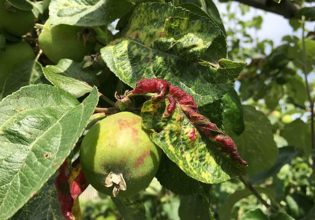 Инсектициды для плодовых деревьев