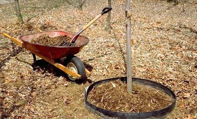 Работы осенью в саду и огороде