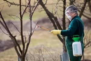 Удобрения для плодовых деревьев весной