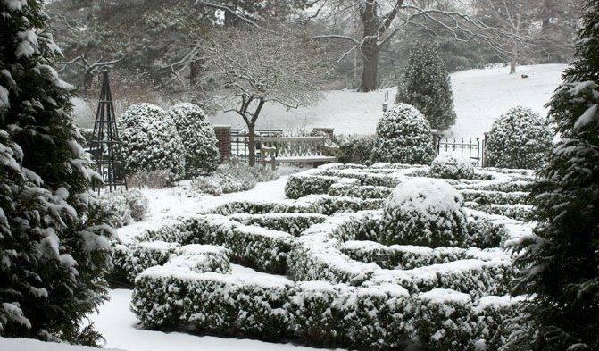 Уход за зимним садом