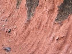 Легкие почвы