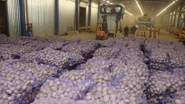 Бизнес на картошке