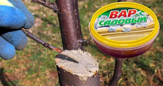 Чем заменить садовый вар для яблонь
