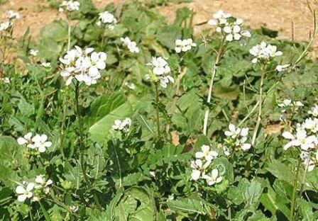 Обработка почвы осенью от болезней и вредителей