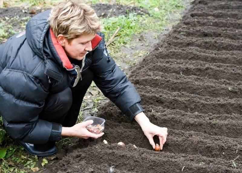 Почва для тюльпанов