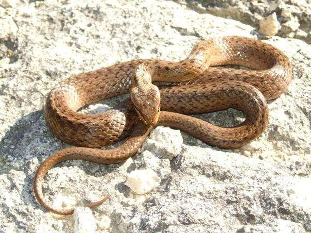 Змея зимой