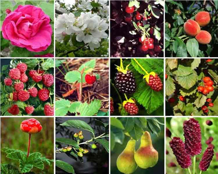 Разноцветные растения