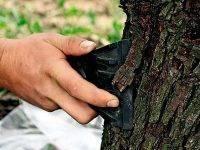 Лечение коры яблони осенью