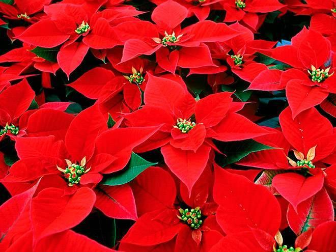 Цветок с красным цветком