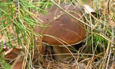 Есть ли сейчас грибы в лесу