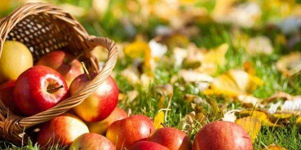 Яблоня зоренька