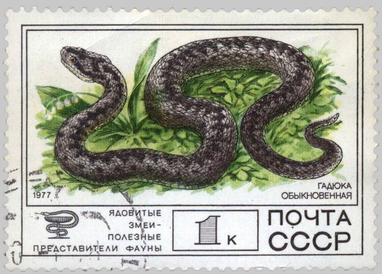 Враги змей в природе