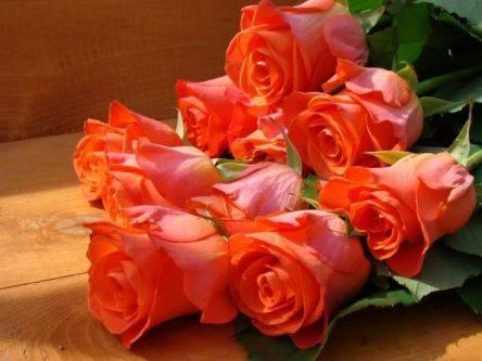 Осенняя посадка роз видео