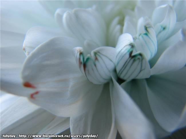 Цветы меняющие цвет