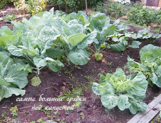 Список овощей для посадки в огороде