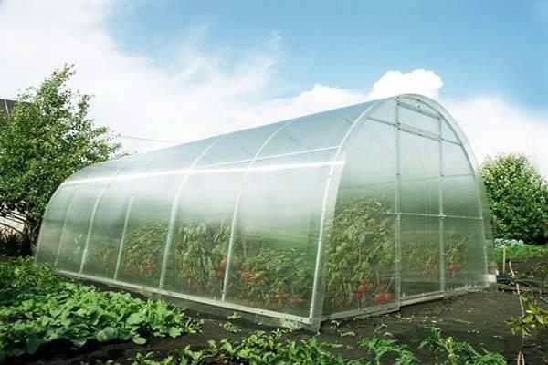 Схема посадки томатов в теплице 3х6
