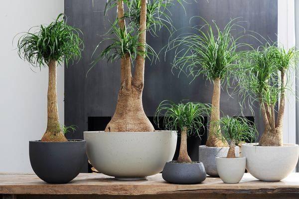 Карликовые растения для дома