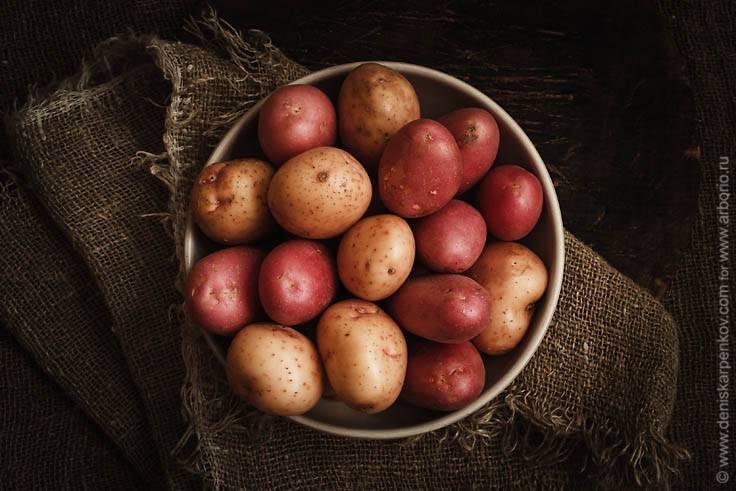 Крахмальные сорта картофеля