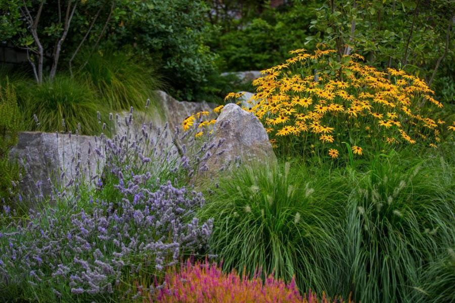 Декоративные садовые растения фото и названия