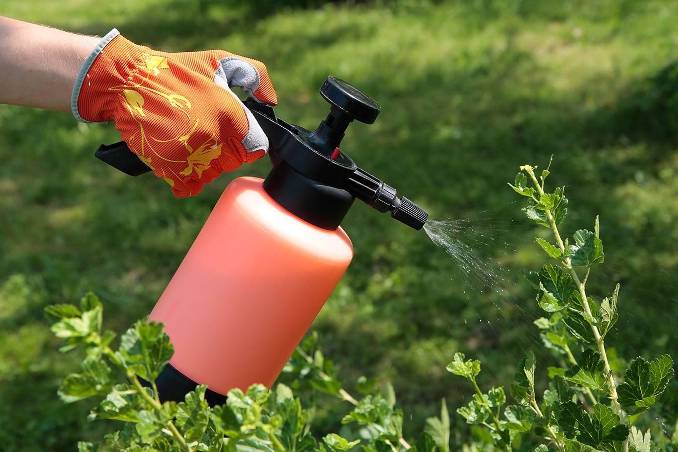 Бактериальные препараты для защиты растений