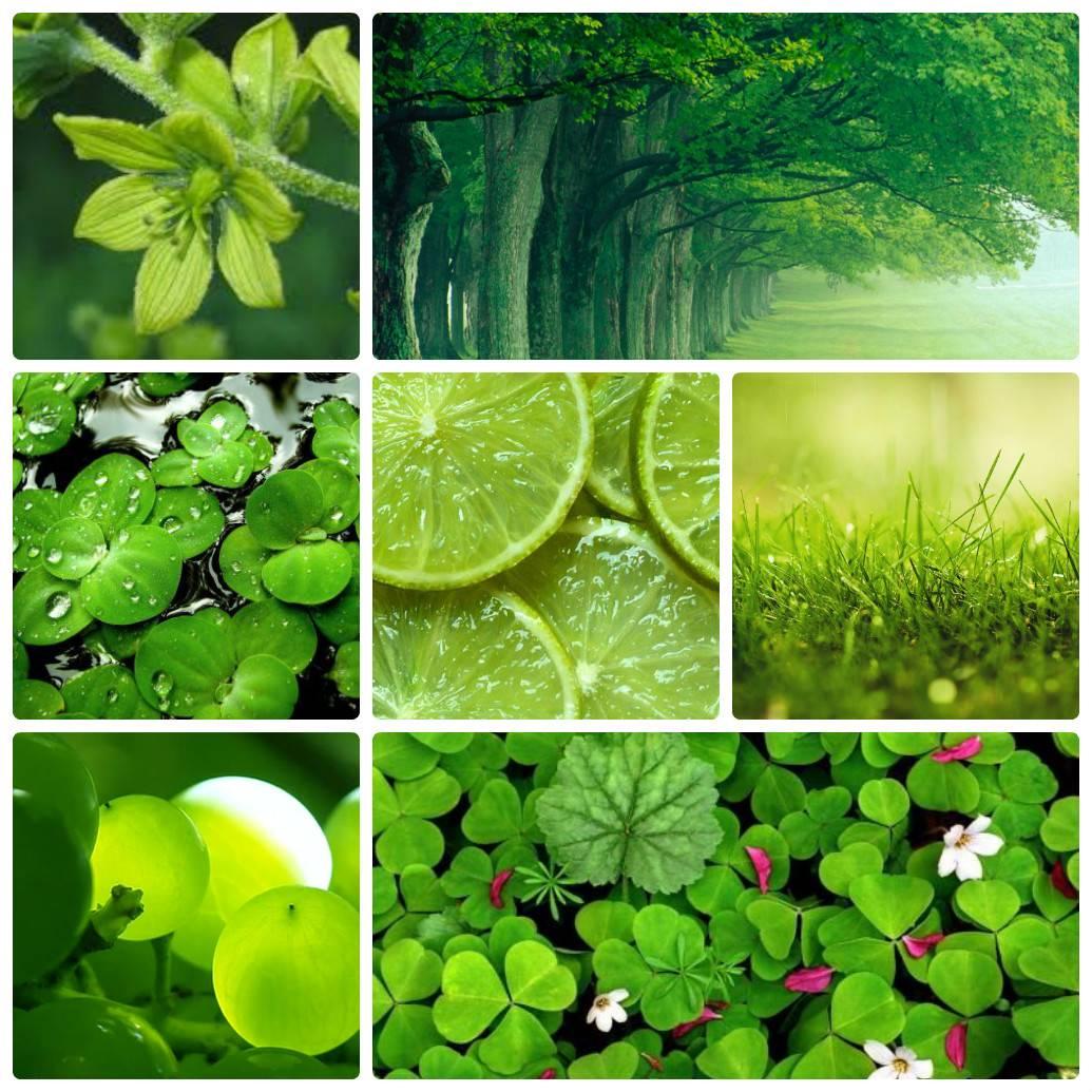 Зеленые цветы названия