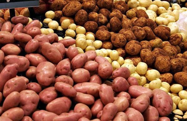 Бизнес на картофеле выгодно или нет