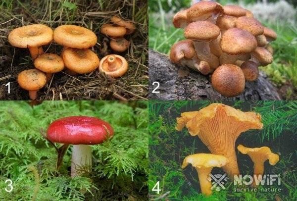 Как собирать грибы в лесу