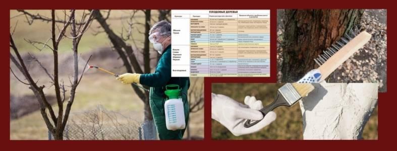 Обработка сада весной от болезней и вредителей