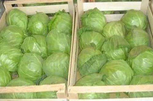 Как хранить капусту в подвале на зиму