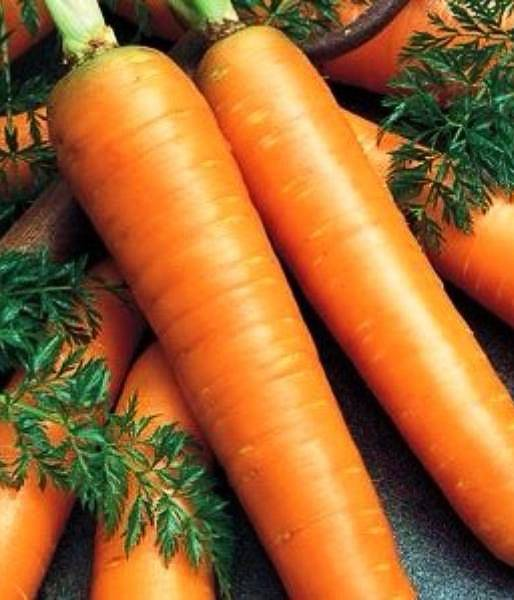 Какой сорт моркови лучше для хранения