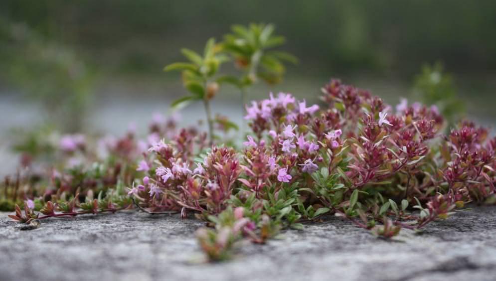 Неприхотливые садовые цветы фото и названия