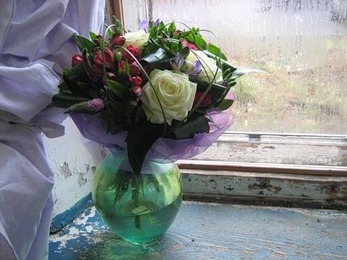 Роза мачо фото и описание