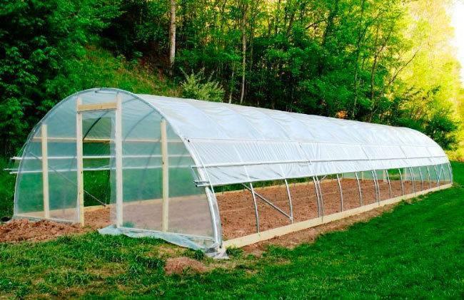 Пленка для укрытия растений