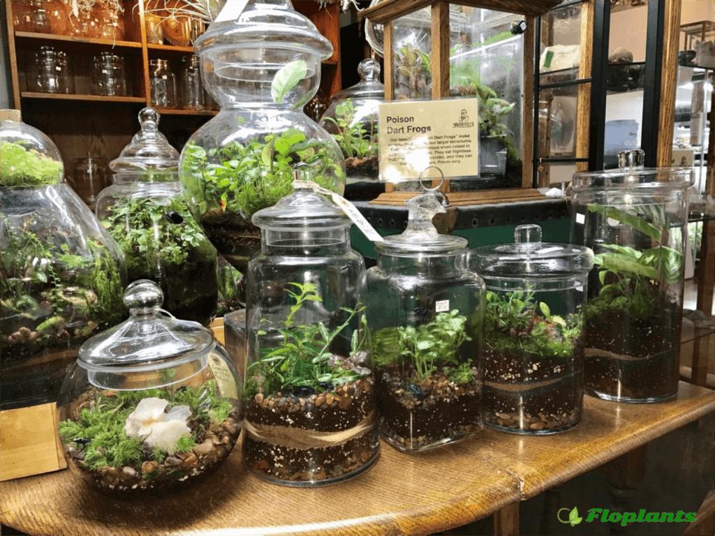 Миниатюрный сад в бутылке