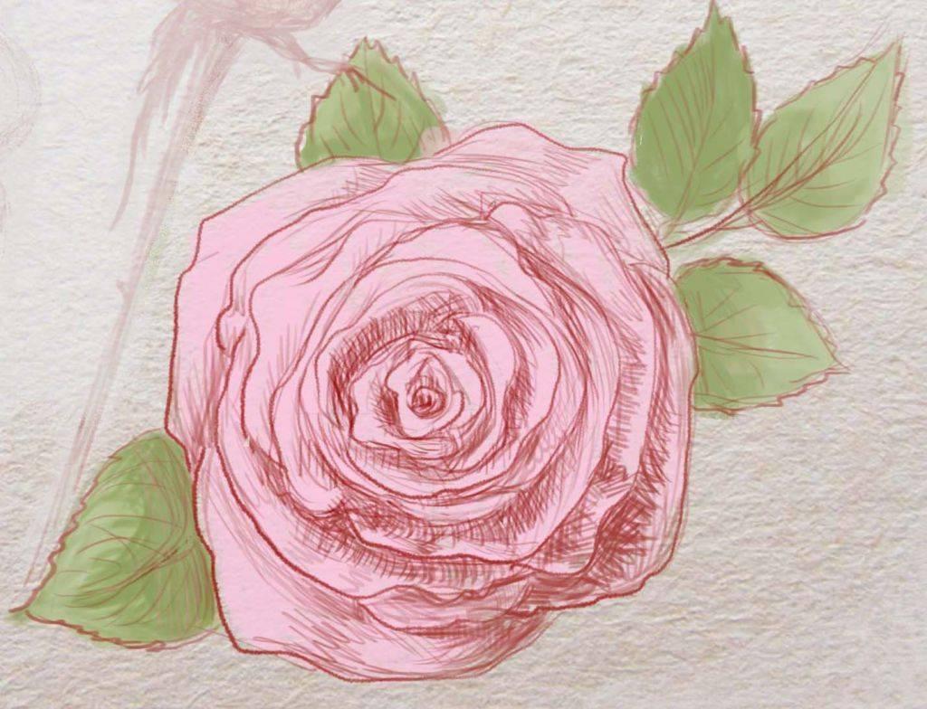 Как раскрасить розу