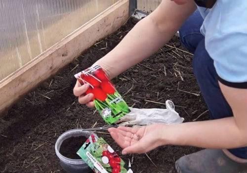 Можно ли сажать редис под зиму