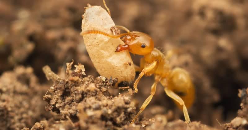 Как избавиться от муравьев на грядках