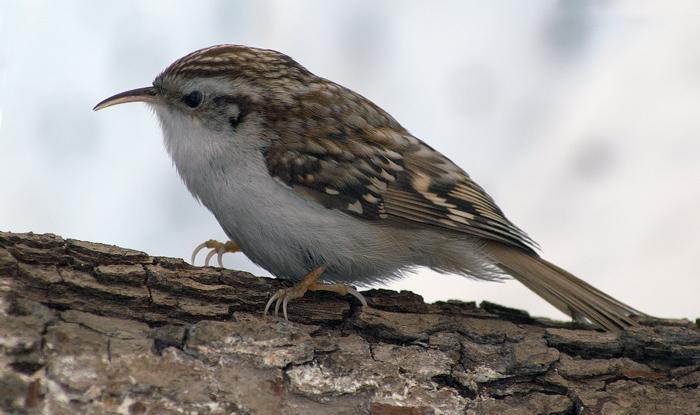 Размеры скворечников для разных птиц