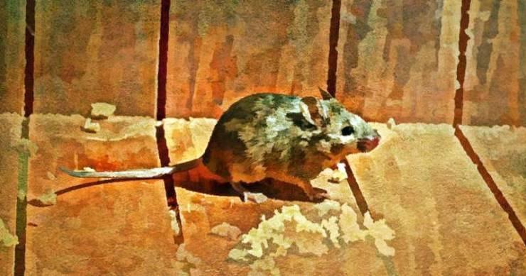 Перечная мята от мышей