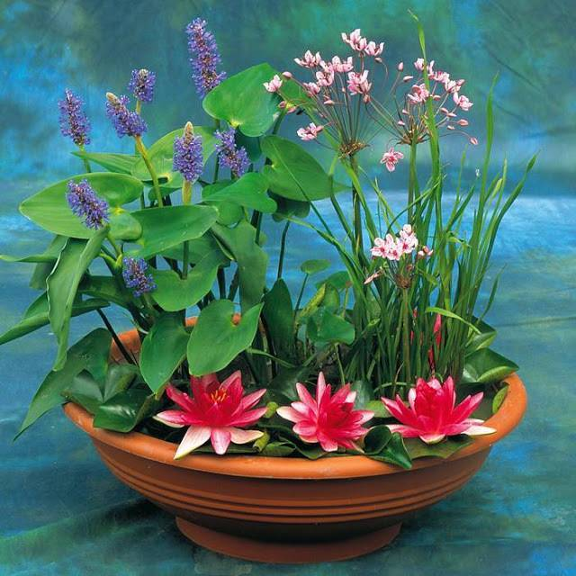 Цветы растущие в воде