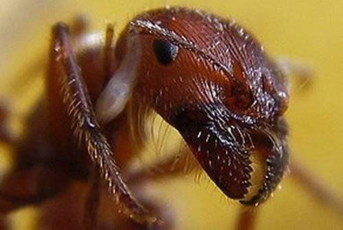 Вредные насекомые для человека