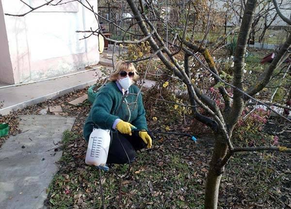 Как развести железный купорос для опрыскивания деревьев