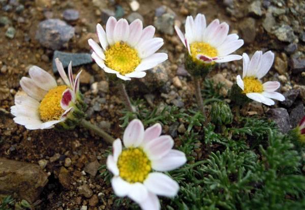 Разноцветные цветочки