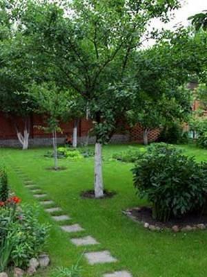 Что посадить в саду чтобы было красиво